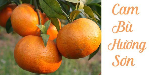 Trồng và chăm sóc cây cam bù Hương Sơn cho quả thơm ngon