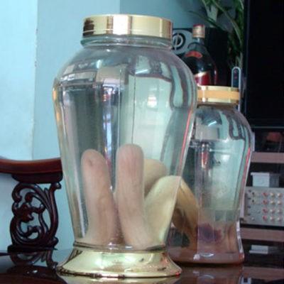Cách sơ chế và sử dụng nhung hươu tươi ngâm rượu